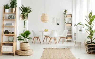 Keep Your Home Healthy with Plants